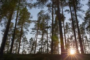 foto consulenze in ambito ambientale